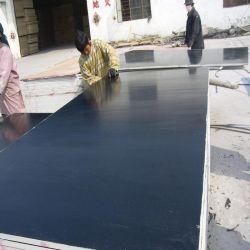 Película Negra la construcción de madera contrachapada de