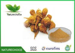 Extrait de racine de Maca, extrait de racine de Maca de qualité supérieure pour le sexe de la poudre à base de plantes, pour l'homme extrait de racine Healthymaca