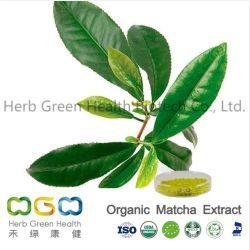 Polvere organica di Matcha dell'estratto naturale della pianta per i biscotti della torta della bevanda con l'inventario in erba degli S.U.A. di erbe