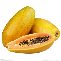 Экстракт плодов Floweringquine Papain общих