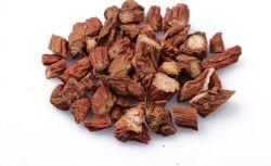 Radix Miltiorrhizae Salviae/Danshen racine / Salvia Root/Herb