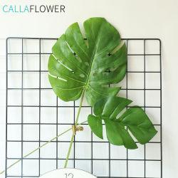 Домашняя оформление Monstera Deliciosa зеленые листья листьев растений