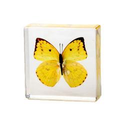 맞춤형 둥근 모양 나비 크리스탈 투명 유리 돔 종페이퍼 무게