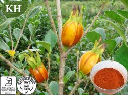 Protecção do fígado Kingherbs Gardenia frutas em pó