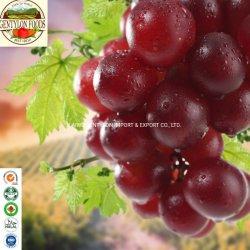 Nova colheita de uvas sem sementes Red mostos de uva Crinson