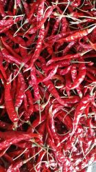 Indian Chili New Crop S15/S17 Deluxe Quality