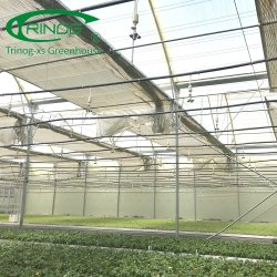 Produtos agrícolas pimenta filme hidroponia das emissões para o mercado interno