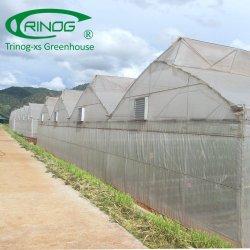 Accueil utilisé net d'insectes backyard serre pour la vente