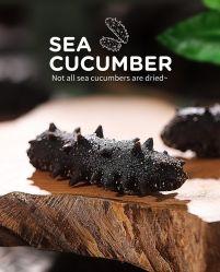 De overzeese Komkommer is een Voedsel van Zeevruchten met Hoge Voedingswaarde