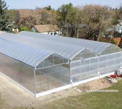الزراعة الغربية النباتية / البيت الأبيض البلاستيك فيلم زهرة الأخضر مع الحديثة المعدات الزراعية