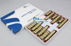 SA31 dentes de resina acrílica de três camadas