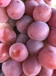 Nouvelle récolte de raisin rouge frais doux
