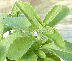 Steviosides & Rebaudioside van uitstekende kwaliteit a - Stevia