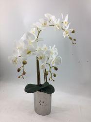 Novo Design de orquídeas com Irondrum Artificial