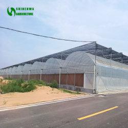 El aislamiento individual/doble/PE/PO/Película/inteligente para las hortalizas de invernadero/fruto/siembra/Granja/Verduras/Flores/Granja/Jardín /Agricultura/invernadero