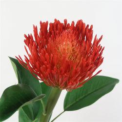 زهرة صناعية Protea الساخرين بروتيا Protea King Protea زهرة استوائية