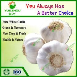 Heet Voedsel 5.0cm van de Landbouw van de Verkoop Knoflook van het Gewas van het Knoflook het Nieuwe Zuivere Witte