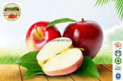 Haut de la qualité des fruits rougir chinois Red Fuji fraîches Apple Prix d'exportation