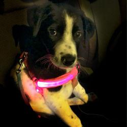 Nachladbare glühende LED-Haustier-Hundekatze-Verdrahtungs-Sicherheits-Leine