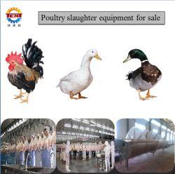 Novo Design de aves de capoeira de abate de frangos para venda de equipamento de matadouro