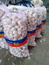 Frischer weißer Knoblauch des Frischgemüse-5.5cm und roter Knoblauch dem Beutel oder dem Karton in des Ineinander greifen-10kg