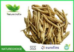 Radice del Ginseng, Ginseng C.A. Meyer del Panax. Radice bassa del Ginseng di alta qualità dell'antiparassitario, estratto della radice del Ginseng