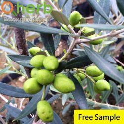 Estratto verde oliva del foglio di Europea del Olea dell'oleuropeina di 20%