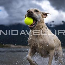 E-TPU 製の Bite Prudutダクト 用の Pet Dog Toy Ball Green Velet シリーズ