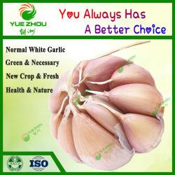 Knoflook van het Gewas van Garlics van Shandong het Nieuwe Normale Witte met Prijs