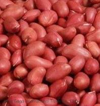 赤い皮(50/60)が付いている競争ピーナツ