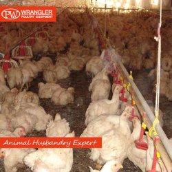 Птицы дома массу оборудования для сельского хозяйства/ птицы оборудования