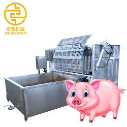 L'équipement d'abattage du porc Depilator