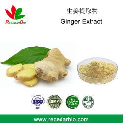 Usine Gingerol d'alimentation de 5 % 23513-14-6 extrait de racine de gingembre en poudre