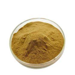 CAS Nr.: 90045-36-6 organisches Ginkgo Biloba Blatt-Auszug-Puder 24/6%.