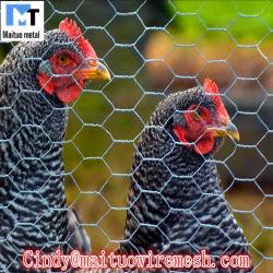 닭 담을%s 직류 전기를 통한 PVC 입히는 6각형 철망사 그물세공