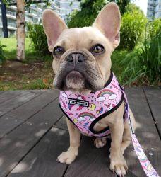 Fácil de colocar e retirar o amortecimento Puppy&Dog Vest o Chicote Elétrico