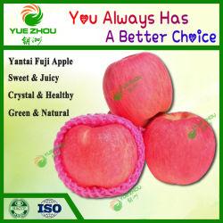 Manzana roja de Yantai FUJI Apple con precios baratos para todo el mundo