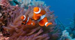 (Randonneur Océan) poissons ornementaux de sel de mer Sel de mer marines