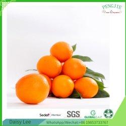 Venta caliente las naranjas frescas, y cítricos frescos con el espacio