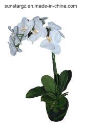 PET Orchideephalaenopsis-künstliche Pflanze im Schmutz für Dekoration (48832)