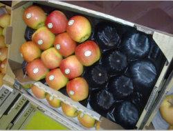 Beste Verkopen van de Verpakking van het Fruit van de Appel van de Grootte van de Fabriek van 100% het Food-Grade pp Standaard Verse in de Markt van Europa