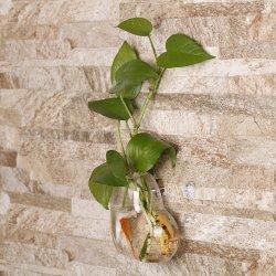 Em forma de coração transparente pendurado na parede da esporinha Recipiente Hidrop Flor vegetais garrafa de vidro