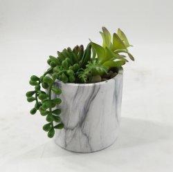 Plantas artificiais de decoração de flores/suculentos