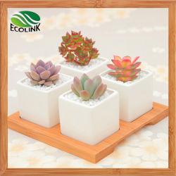 Plaza de la combinación de cuatro flores de cerámica de la suculenta olla con soporte de bambú