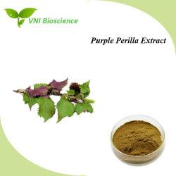Haute qualité certifié ISO 100% naturel violet Perilla extrait de plante pour la toux et le flegme