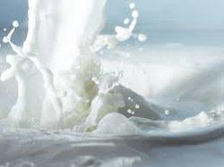 Premium leche en polvo lleno de grasa vegetal