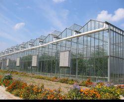 Verre en acier galvanisé Green House avec système de culture de lumière pour la tomate