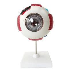 Beste Preis-menschliche Bezugsschule-unterrichtendes Auge vorbildliches realistisches Augen-Modell der menschlichen Simulations-3D