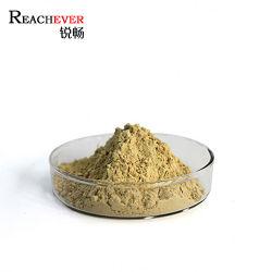 Fabrication de haute qualité extrait de racine de ginseng en poudre