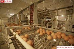 Longfeng completamente automatico Farming House impianto avicolo tipo H. Gabbia di Hen strato